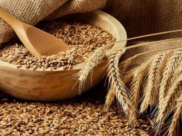 Применение фундаментального анализа на примере торговли фьючерсами на пшеницу на СМЕ и ICE