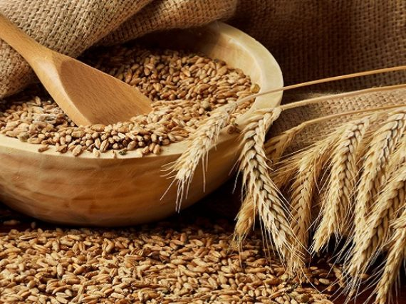 The use of fundamental analysis on the example of trading wheat futures on CME and ICE