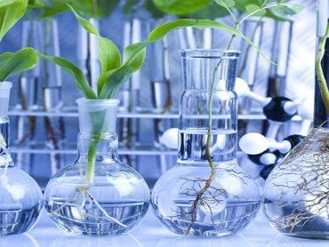 Biotech: bubble or the future?